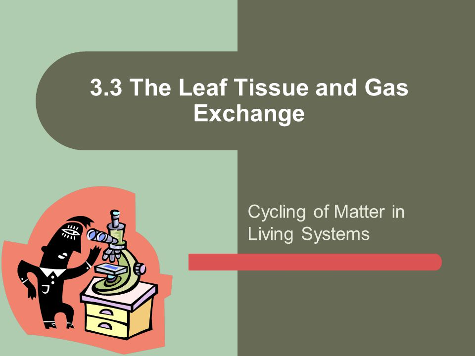 Cycling of Matter in Living Systems 3.3 The Leaf Tissue and Gas Exchange