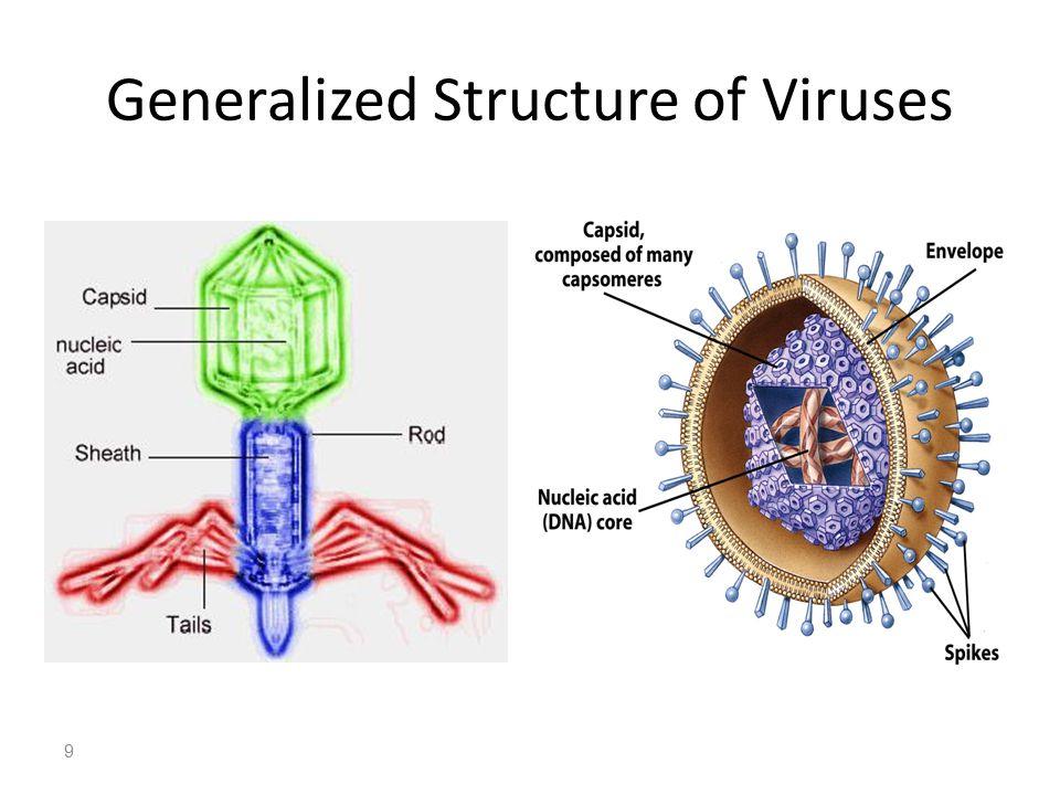 Rod Viruses Diagrams Diy Enthusiasts Wiring Diagrams