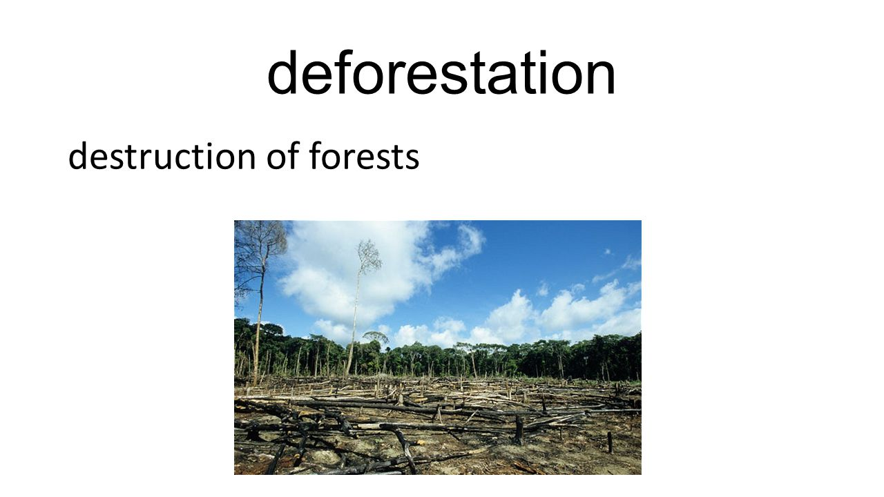 deforestation destruction of forests