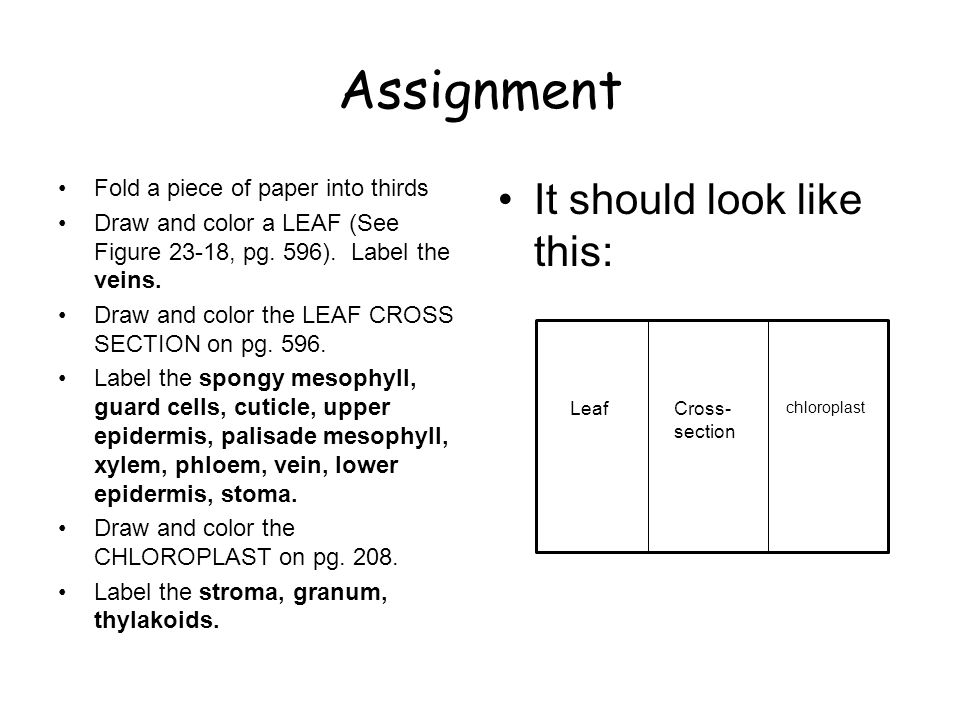 Assignment Fold a piece of paper into thirds Draw and color a LEAF (See Figure 23-18, pg.