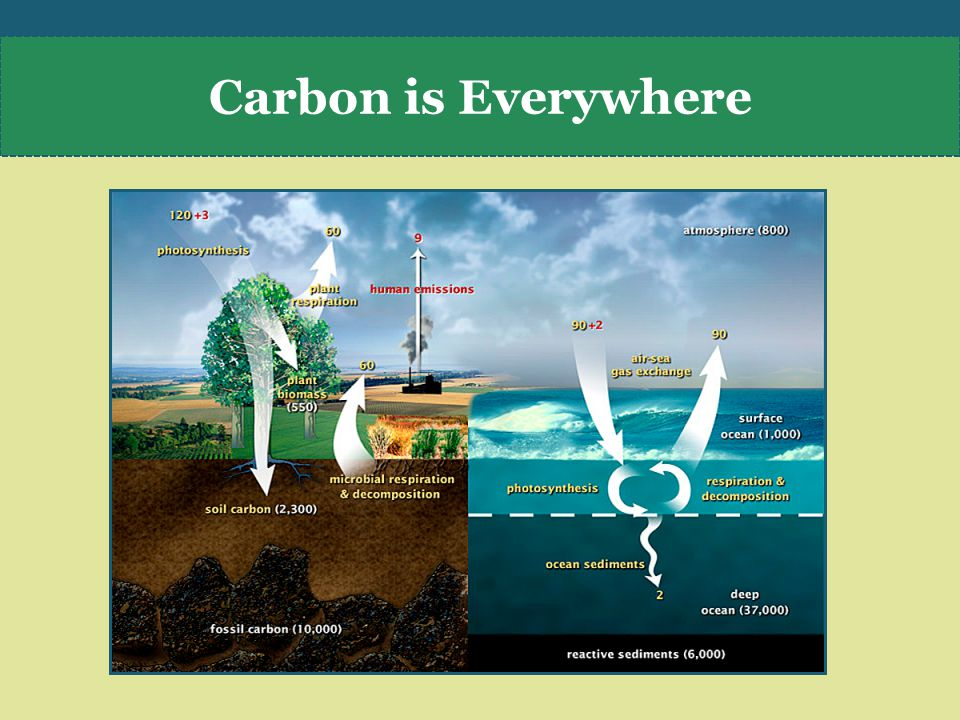 Carbon is Everywhere
