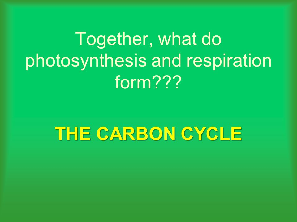 Together, what do photosynthesis and respiration form THE CARBON CYCLE