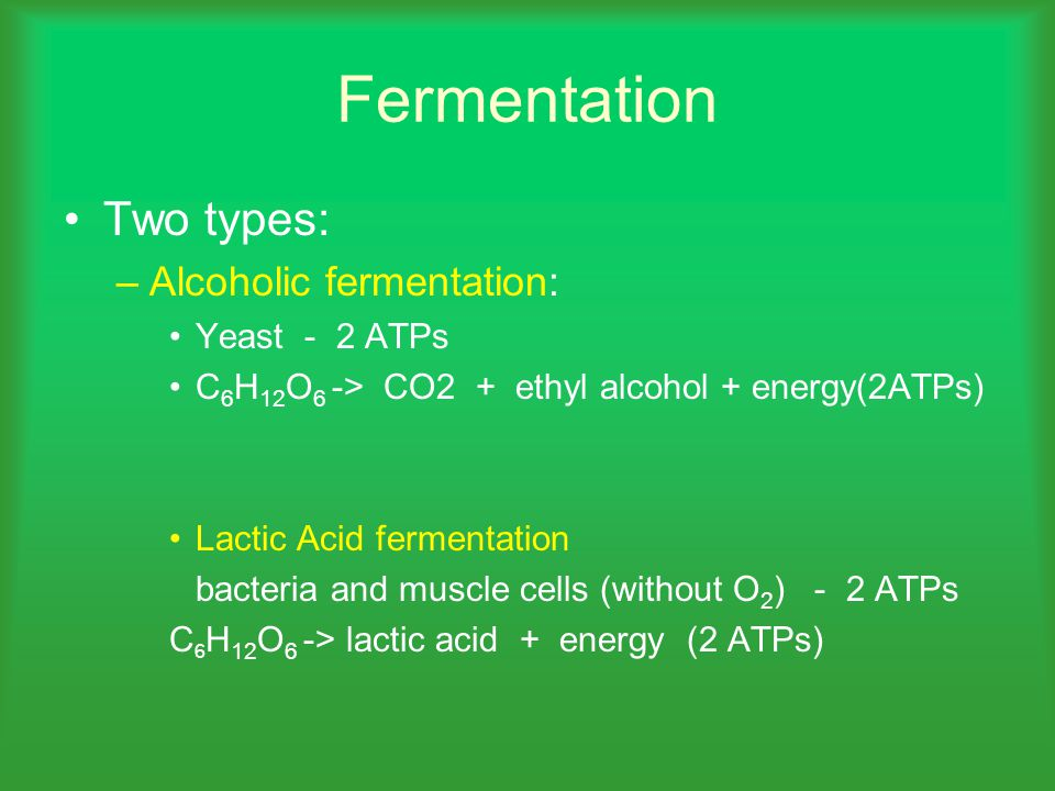 Fermentation Two types: –Alcoholic fermentation: Yeast - 2 ATPs C 6 H 12 O 6 -> CO2 + ethyl alcohol + energy(2ATPs) Lactic Acid fermentation bacteria and muscle cells (without O 2 ) - 2 ATPs C 6 H 12 O 6 -> lactic acid + energy (2 ATPs)