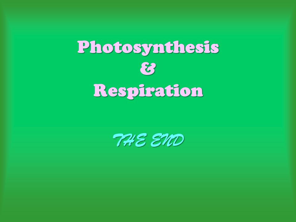 Photosynthesis & Respiration THE END
