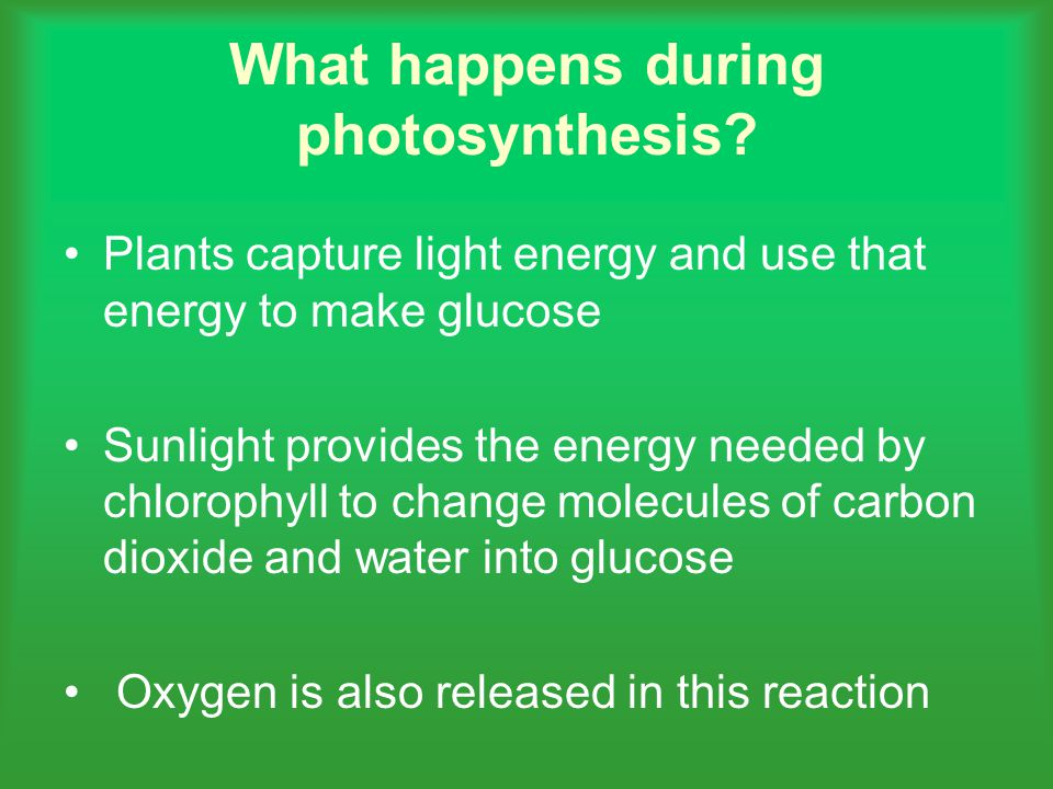 What happens during photosynthesis.