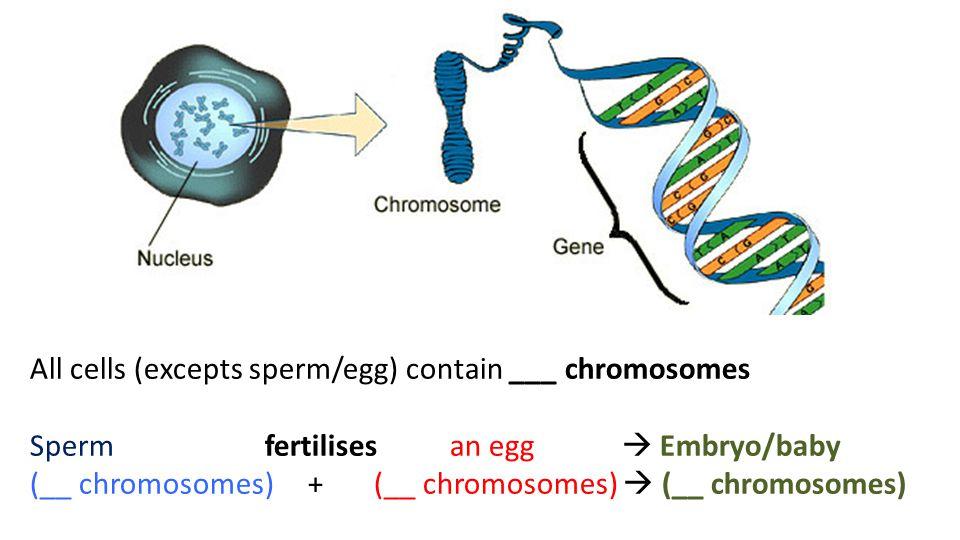 Determining chromosomes in sperm — photo 4