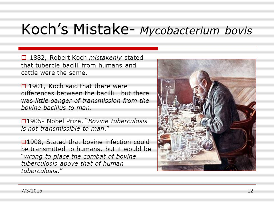 7/3/201512 Koch's Mistake- Mycobacterium bovis  1882, Robert Koch mistakenly stated that tubercle bacilli from humans and cattle were the same.