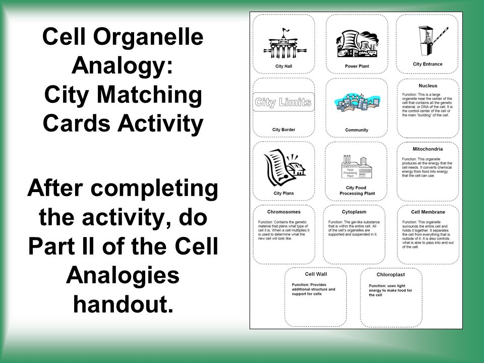 Cell Structure & Function - ppt download