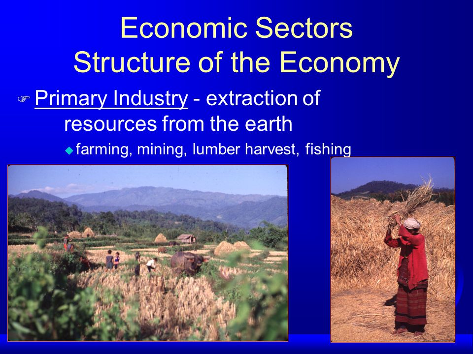 Economic Sectors Structure of the Economy F Primary Industry - extraction of resources from the earth u farming, mining, lumber harvest, fishing