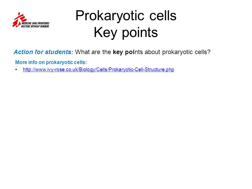 Prokaryotic cells Key points More info on prokaryotic cells:   Action for students: What are the key points about prokaryotic cells