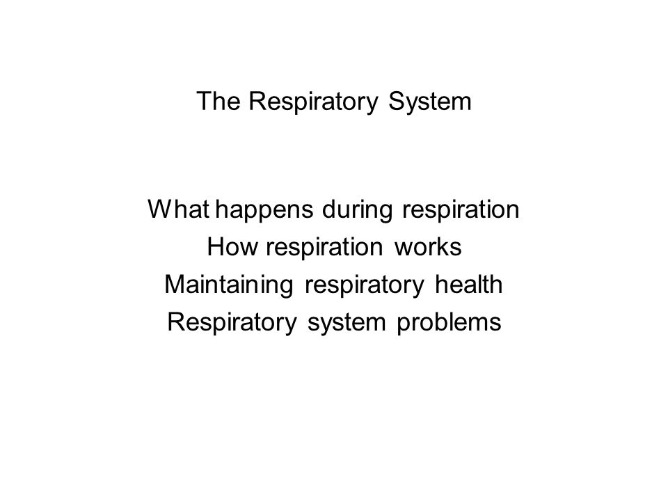 The Respiratory System What happens during respiration How respiration works Maintaining respiratory health Respiratory system problems
