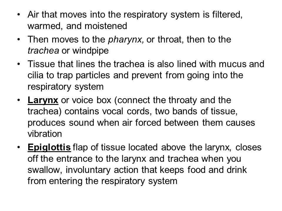 Air that moves into the respiratory system is filtered, warmed, and moistened Then moves to the pharynx, or throat, then to the trachea or windpipe Tissue that lines the trachea is also lined with mucus and cilia to trap particles and prevent from going into the respiratory system Larynx or voice box (connect the throaty and the trachea) contains vocal cords, two bands of tissue, produces sound when air forced between them causes vibration Epiglottis flap of tissue located above the larynx, closes off the entrance to the larynx and trachea when you swallow, involuntary action that keeps food and drink from entering the respiratory system