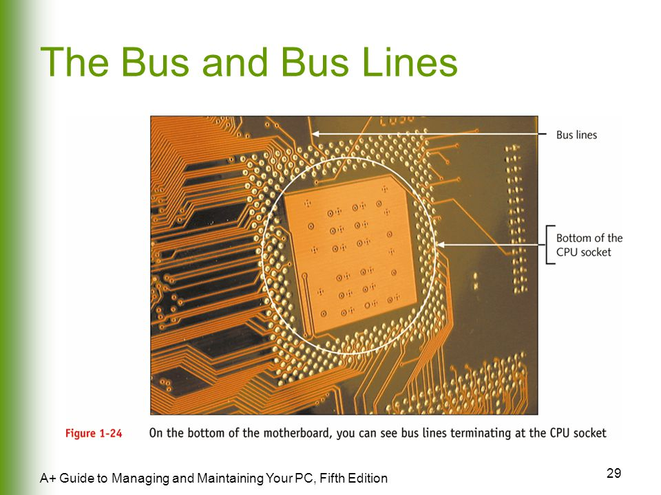 29 A+ Guide to Managing and Maintaining Your PC, Fifth Edition The Bus and Bus Lines