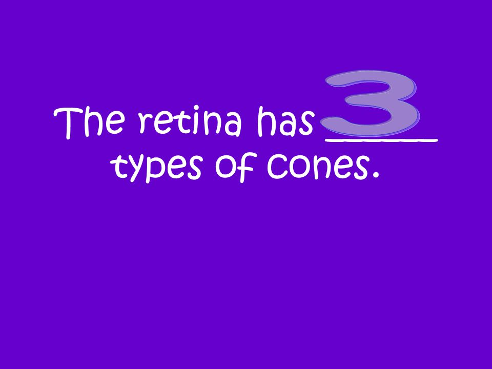 The retina has ______ types of cones.