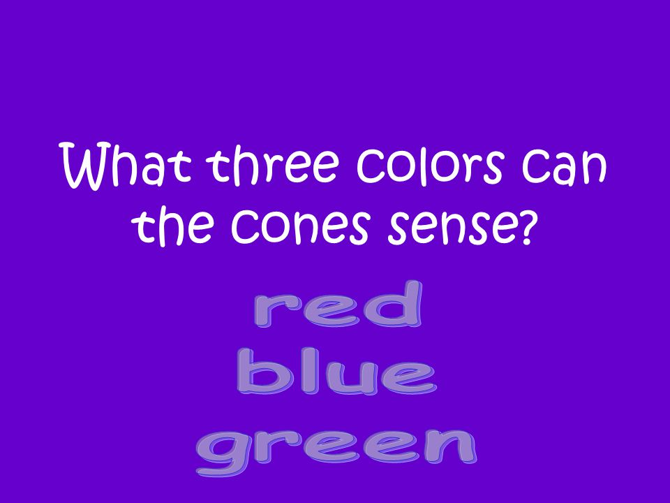 What three colors can the cones sense