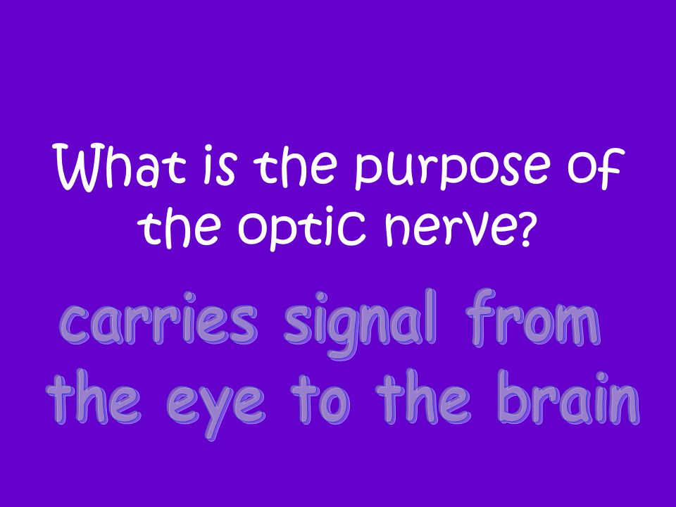 What is the purpose of the optic nerve