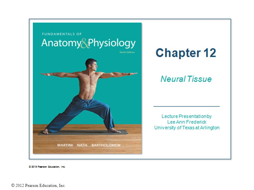 BIOL 2401 Fundamentals of Anatomy and Physiology Mrs. Willie Grant ...