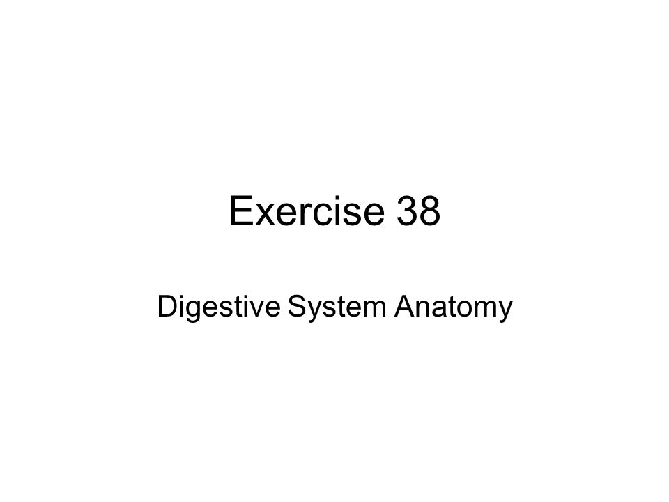 Exercise 38 Digestive System Anatomy. Functions of the Digestive ...