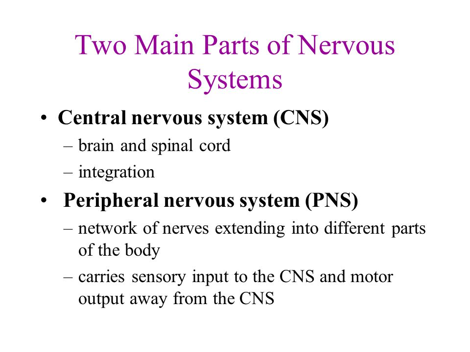 what are the three parts of the central nervous system