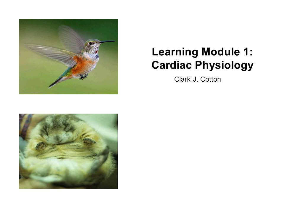 Learning Module 1: Cardiac Physiology Clark J. Cotton. - ppt download