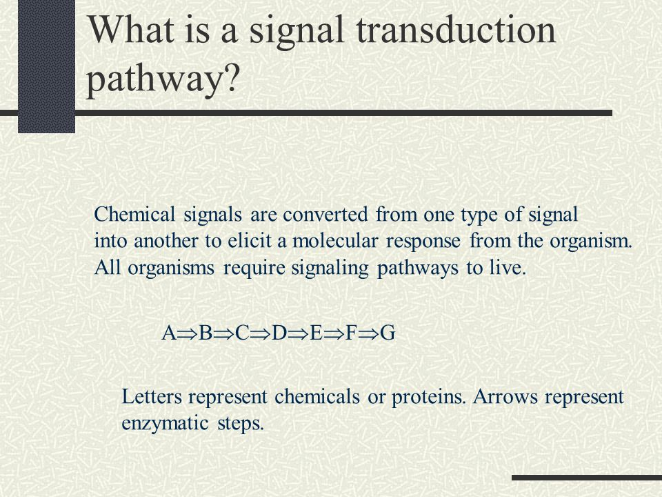 What is a signal transduction pathway.