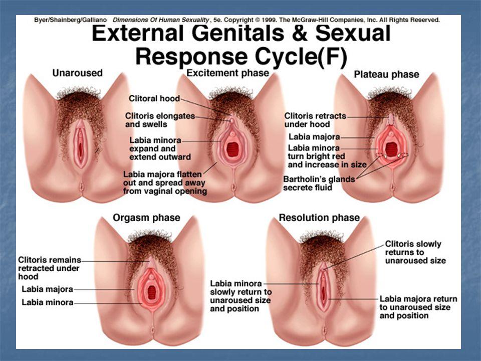 Vulva Could Be Damaged By Designer Vagina Procedure As Nerves Sit Millimetres Under The Skin