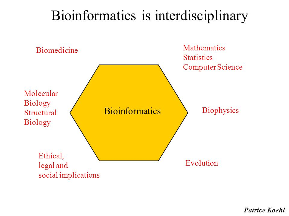 Bioinformatics is interdisciplinary Mathematics Statistics Computer Science Biophysics Evolution Ethical, legal and social implications Molecular Biology Structural Biology Biomedicine Bioinformatics Patrice Koehl