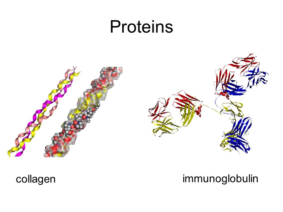 Proteins collagen immunoglobulin