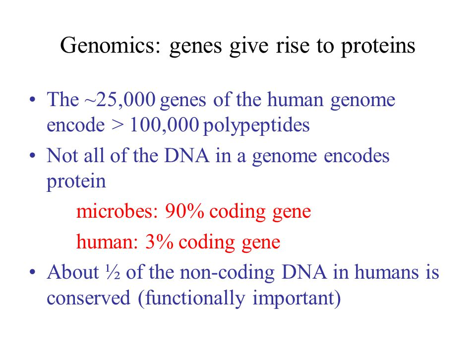 Genomics: genes give rise to proteins The ~25,000 genes of the human genome encode > 100,000 polypeptides Not all of the DNA in a genome encodes protein microbes: 90% coding gene human: 3% coding gene About ½ of the non-coding DNA in humans is conserved (functionally important)