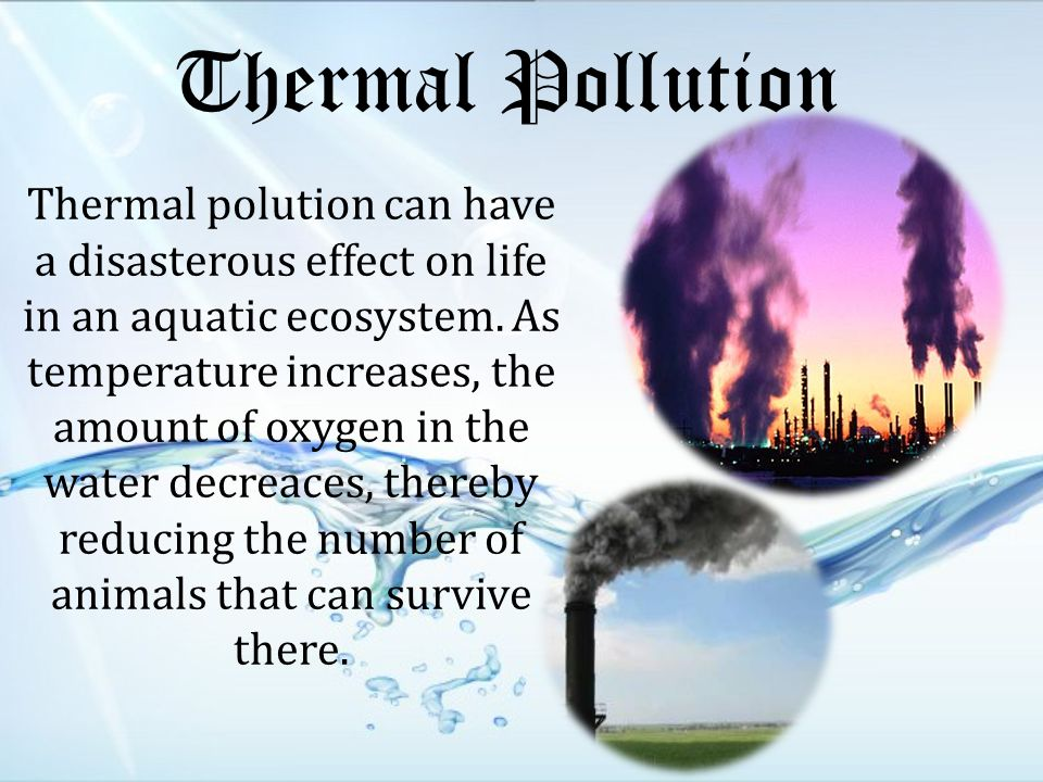 Thermal Pollution Thermal polution can have a disasterous effect on life in an aquatic ecosystem.