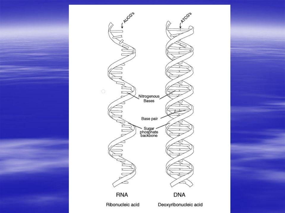 Dolphin sperm cytoplasmic ribosomes geile dreilochstute
