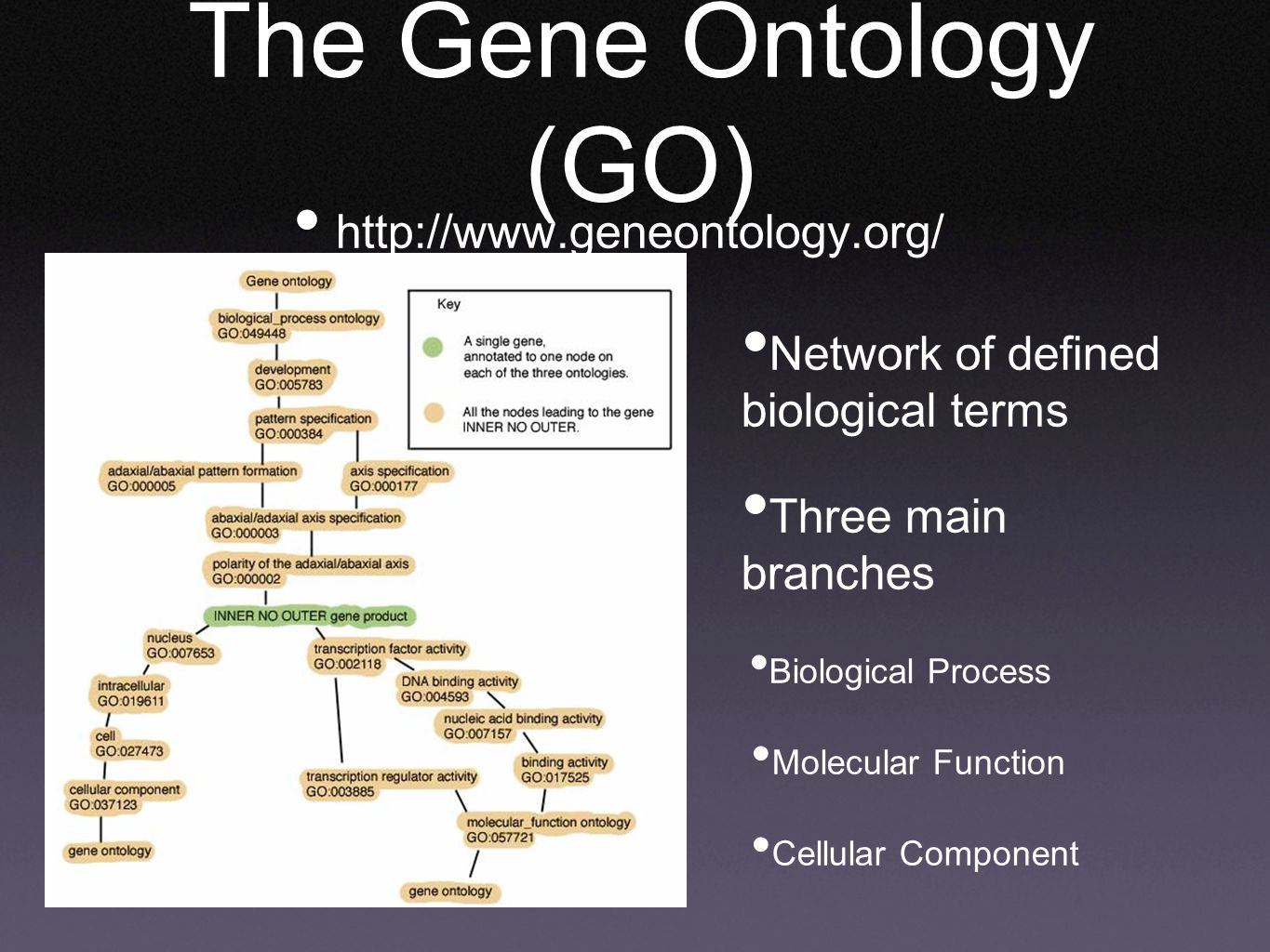 The Gene Ontology (GO)   Network of defined biological terms Three main branches Biological Process Molecular Function Cellular Component