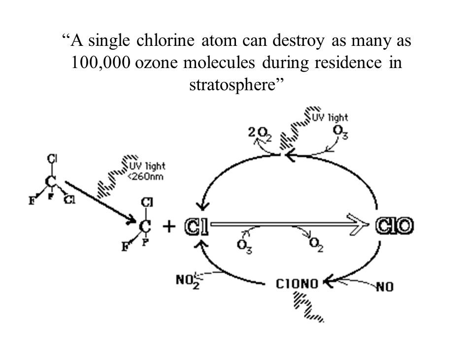 A single chlorine atom can destroy as many as 100,000 ozone molecules during residence in stratosphere