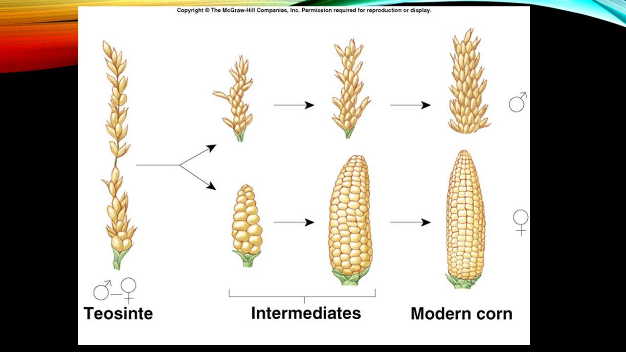 Natural Selection Evidence Of Evolution And Evolutionary Biology
