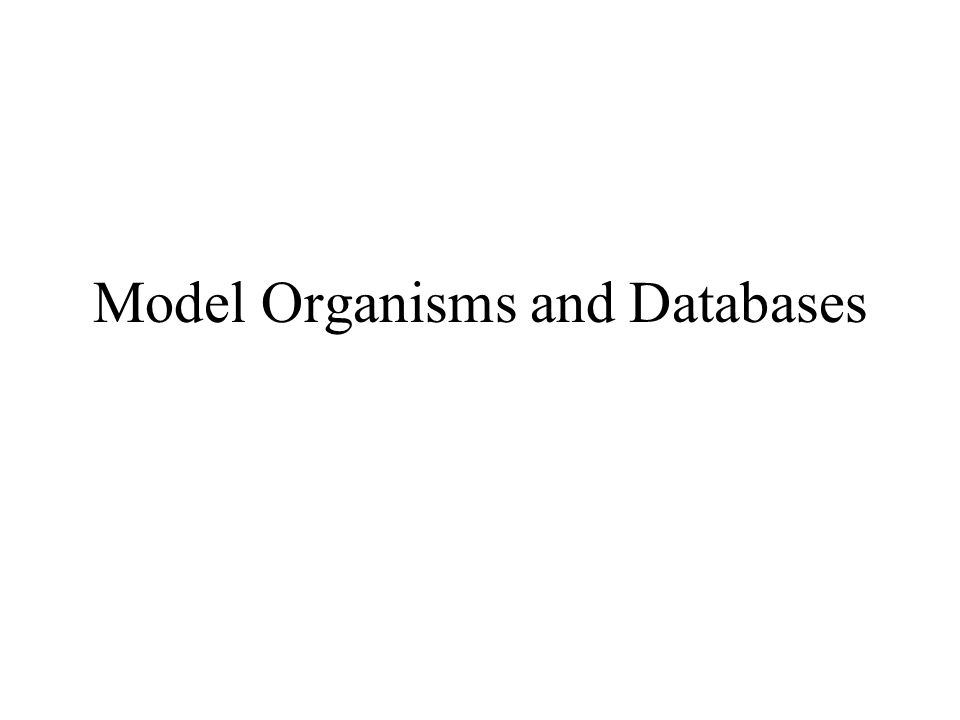 Model Organisms and Databases