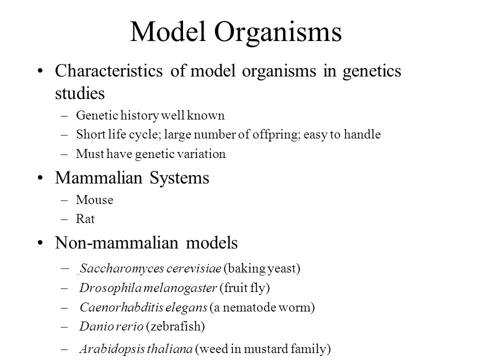 Model Organisms Characteristics of model organisms in genetics studies –Genetic history well known –Short life cycle; large number of offpring; easy to handle –Must have genetic variation Mammalian Systems –Mouse –Rat Non-mammalian models – Saccharomyces cerevisiae (baking yeast) – Drosophila melanogaster (fruit fly) – Caenorhabditis elegans (a nematode worm) – Danio rerio (zebrafish) – Arabidopsis thaliana (weed in mustard family)