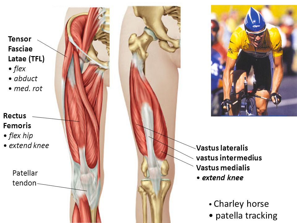 How muscles work – in general muscles that move the mandible ...
