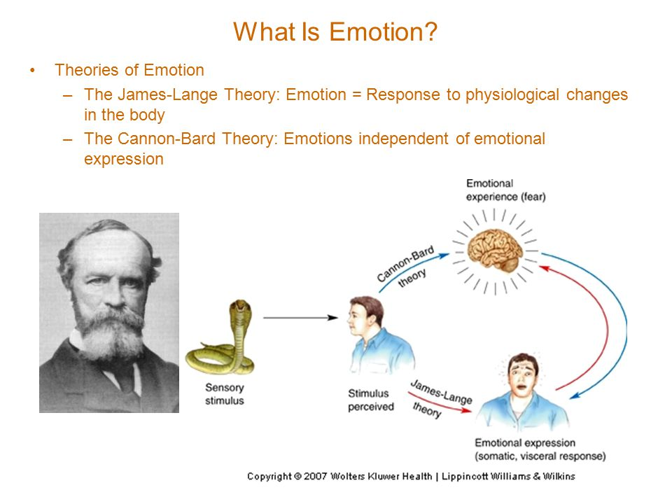 What Is Emotion.