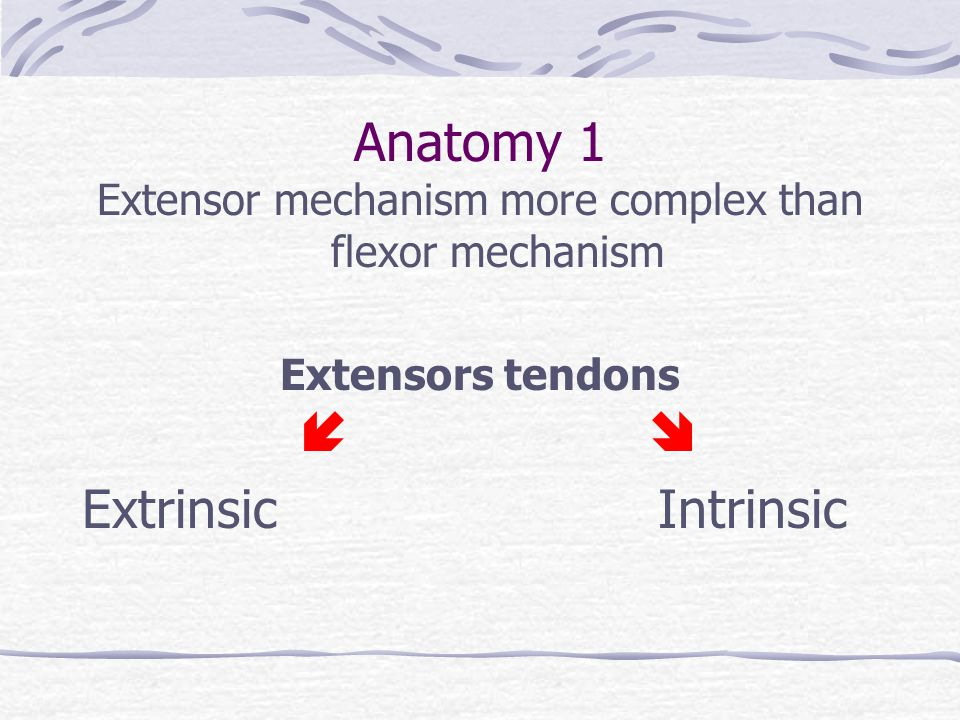 Extensors tendons of hand Functional anatomy M Al-Maiyah April ppt ...