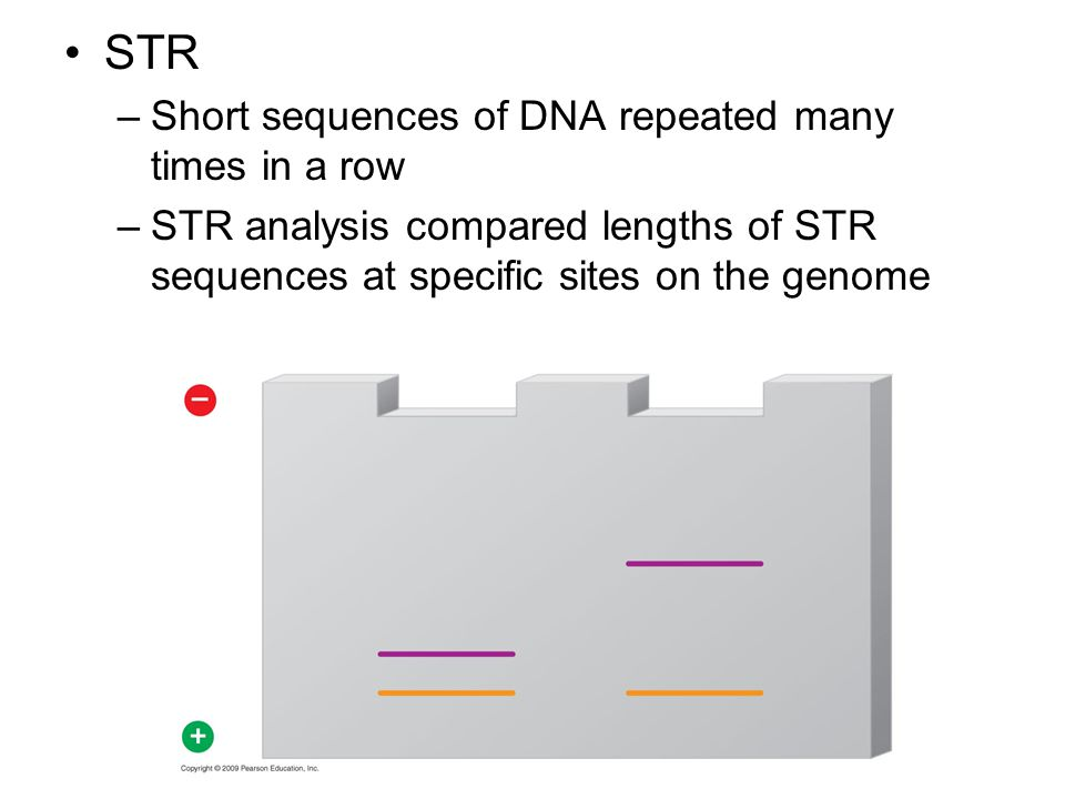 STR –Short sequences of DNA repeated many times in a row –STR analysis compared lengths of STR sequences at specific sites on the genome