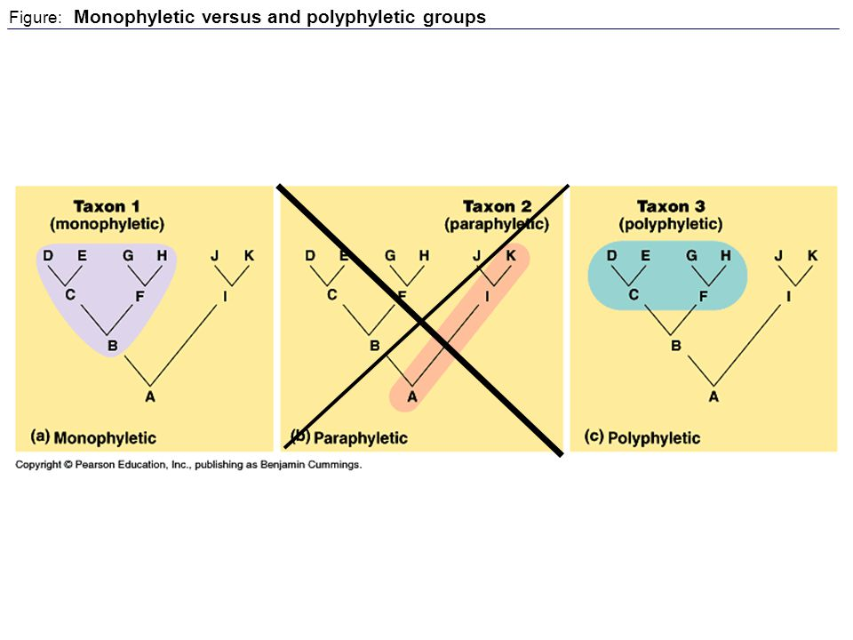 Figure: Monophyletic versus and polyphyletic groups