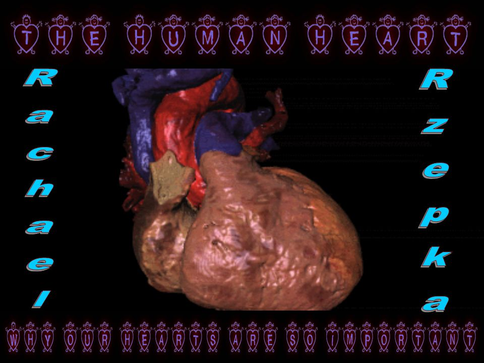 The Heart Is Actually Located In The Middle Of The Chest Near The