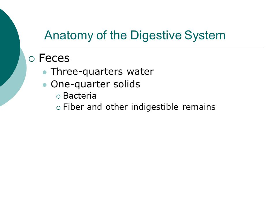 Anatomy of the Digestive System  Feces Three-quarters water One-quarter solids  Bacteria  Fiber and other indigestible remains