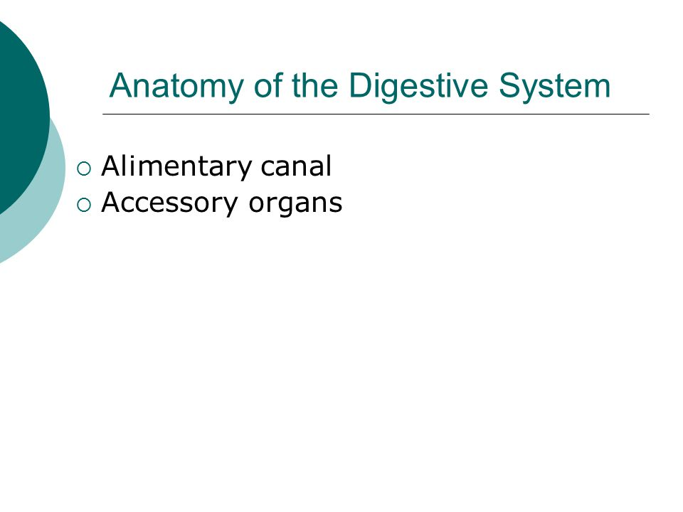 Anatomy of the Digestive System  Alimentary canal  Accessory organs
