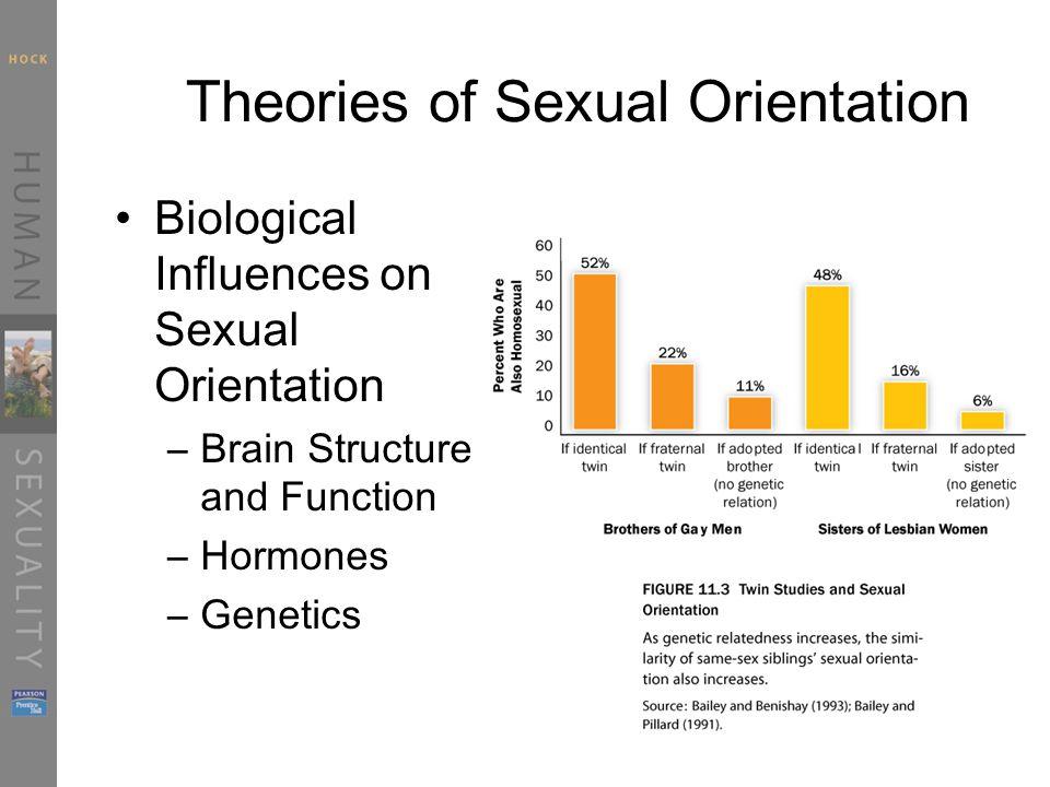 Sexual orientation brain structure