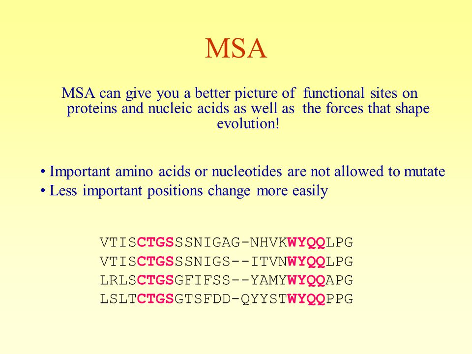 MSA MSA can give you a better picture of functional sites on proteins and nucleic acids as well as the forces that shape evolution.