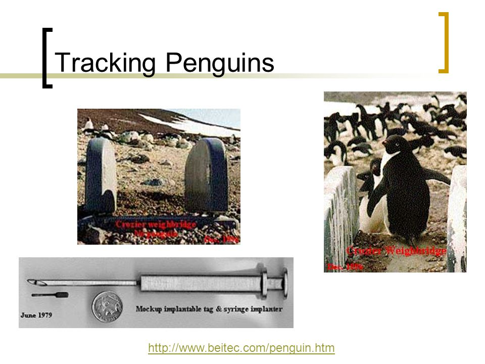 Tracking Penguins