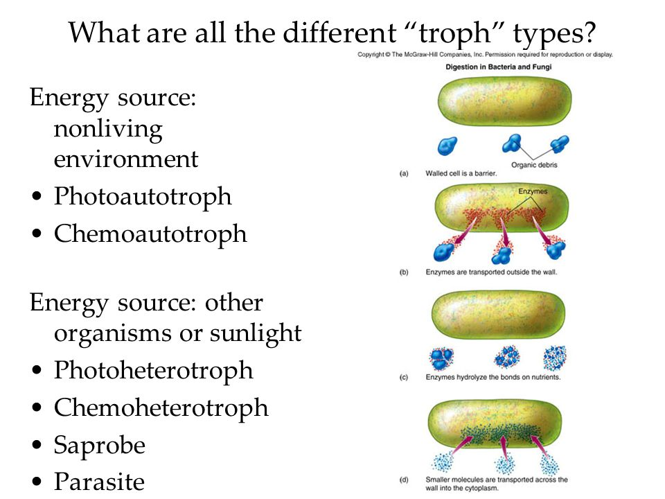 What are all the different troph types.