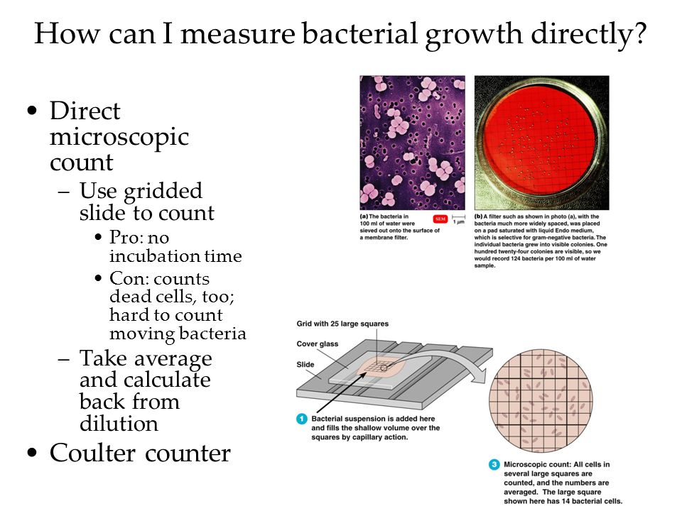 How can I measure bacterial growth directly.