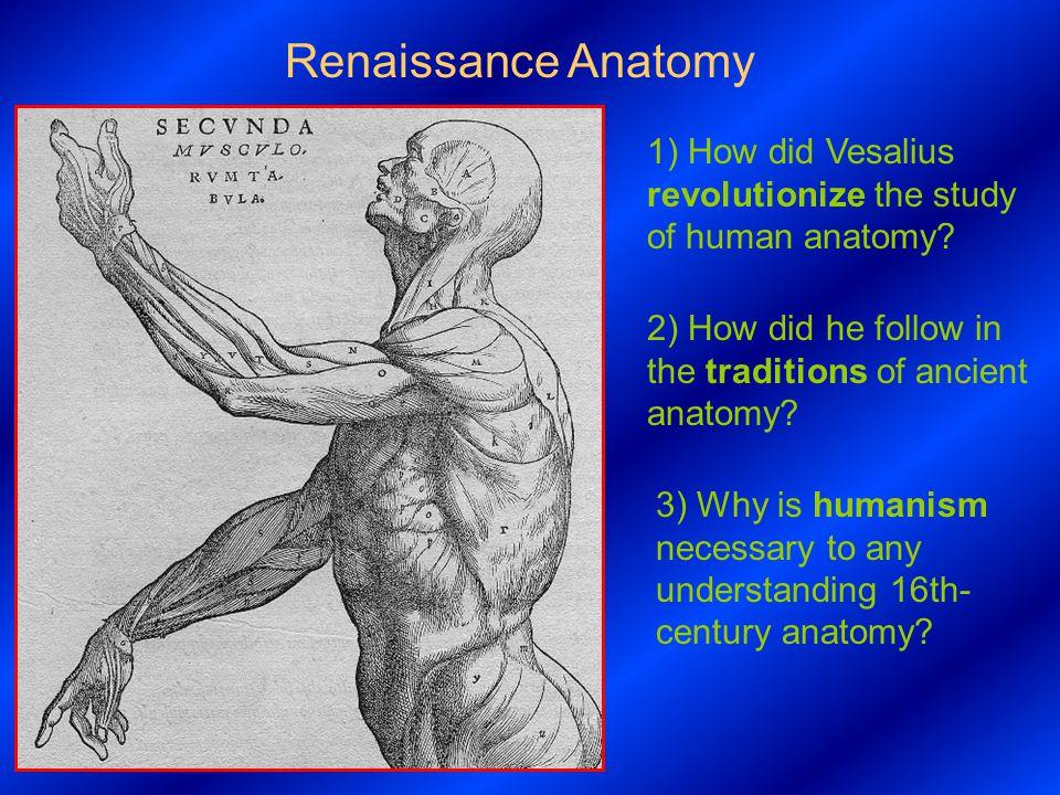 Renaissance Anatomy 1 How Did Vesalius Revolutionize The Study Of
